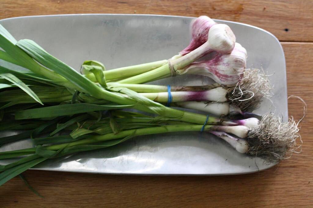 Выращивание чеснока на зелень 97