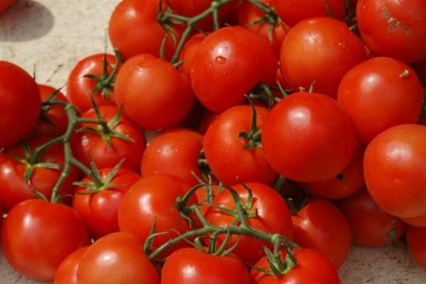 Томат сорта Верлиока: описание и характеристики, выращивание, отзывы