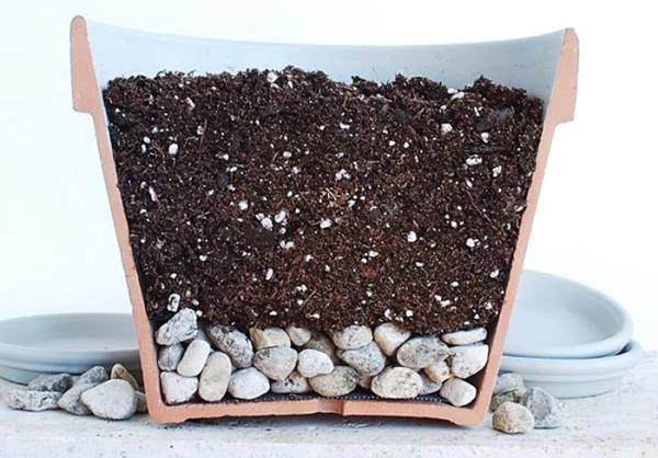 Высаживать семена нужно в горшок с хорошим дренажным слоем, подойдет готовая земля для орхидей