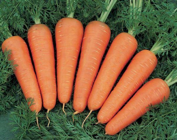 Крупноплодная морковь Канада F1