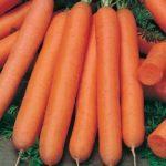 Морковь Нантская красная