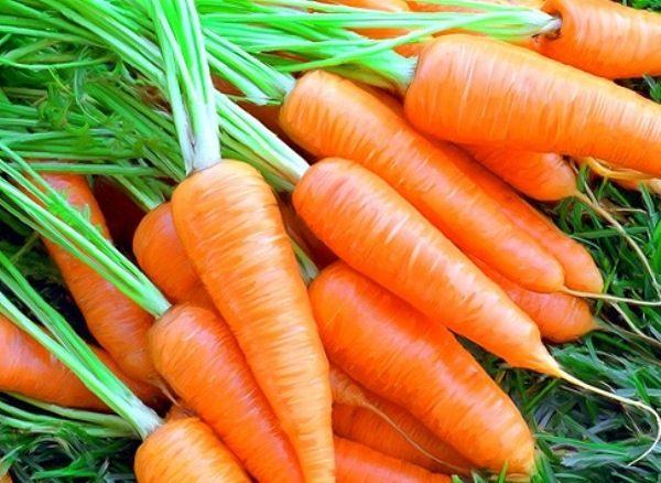 Морковь сорт Любимая