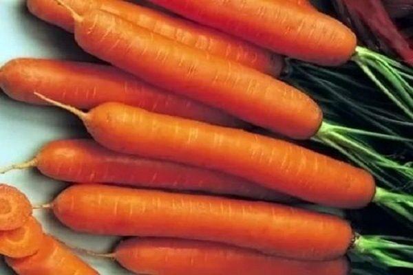 Морковь сорт Нандрин F1