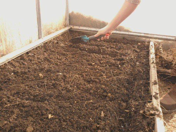 Подготовка почвы под посадку семян помидор