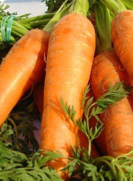 Ранняя морковь Тушон