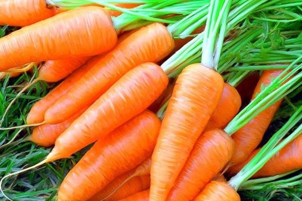 Морковь и ее ботва содержат множество витаминов и минералов