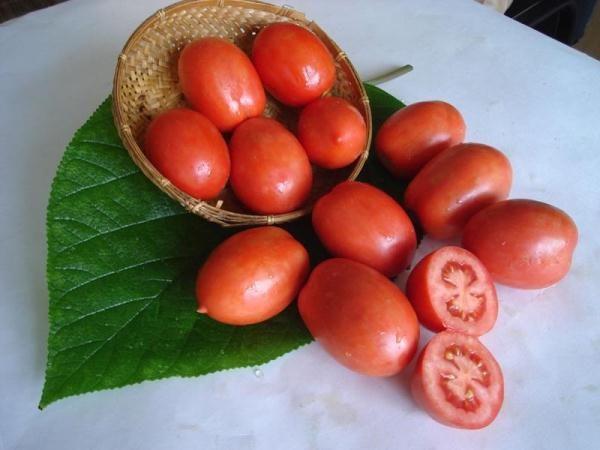 Челнок – раннеспелый высокоурожайный сорт помидор
