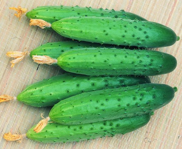 Плоды Апрельского имеют длину 15-25см