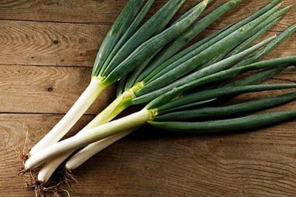 Лук-батун выращивают только для получения зелени