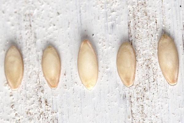 Семена нужно тщательно перебрать и отсеять пустые, продезинфицировать и закалить