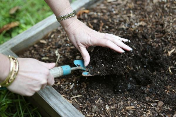 Участок под будущую посадку огурцов нужно удобрить осенью или весной, перекопать