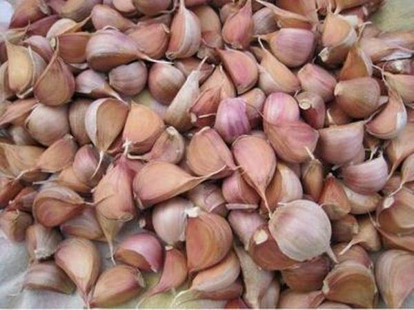 Перед тем, как производить высадку, семена нужно откалибровать