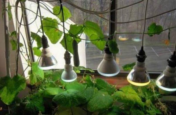 устанавливаем специальные лампы