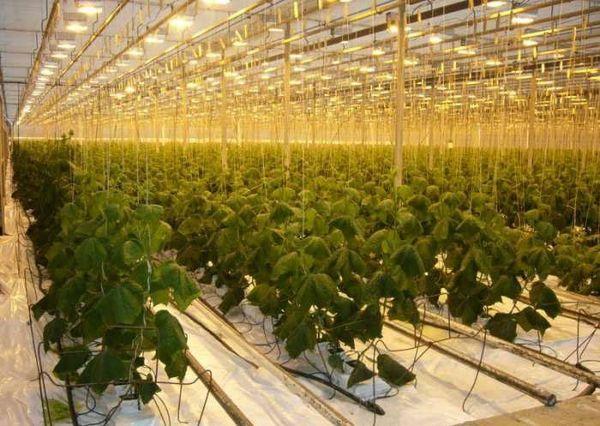 Если гидропонная система применяется для промышленного выращивания - понадобится применение насосов