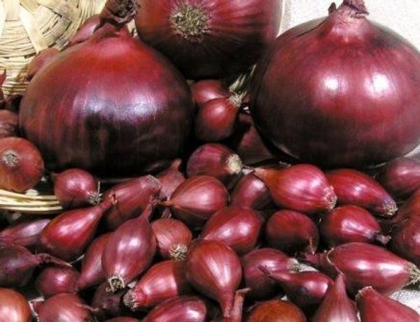 Как сажать капусту семенами в открытый грунт: подготовка