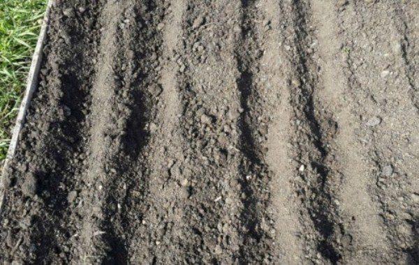 Грядка под посадку лука чернушки