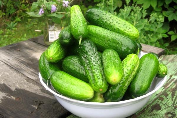 Урожайность высокая, товарный вид и вкусовые качества отменные