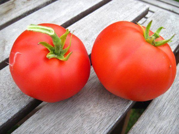 Раннеспелый сорт томата Москвич