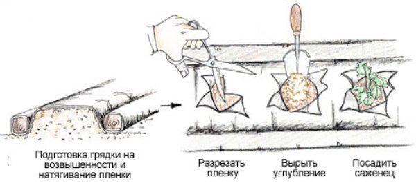 Процесс посадки клубники на укрывной материал