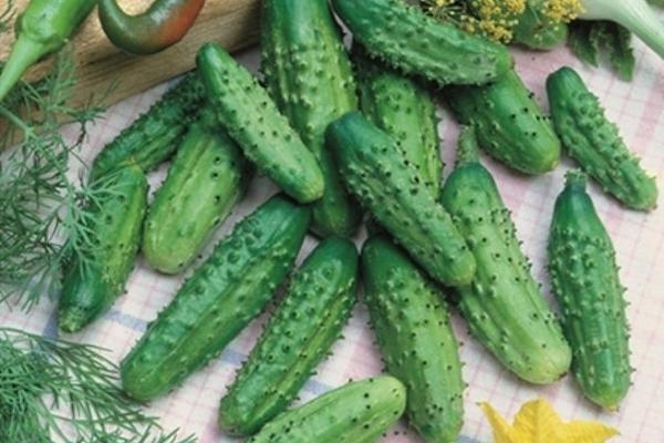 Главной особенностью сорта является маленький размер плодов, которые варьируются от 10 до 12 см