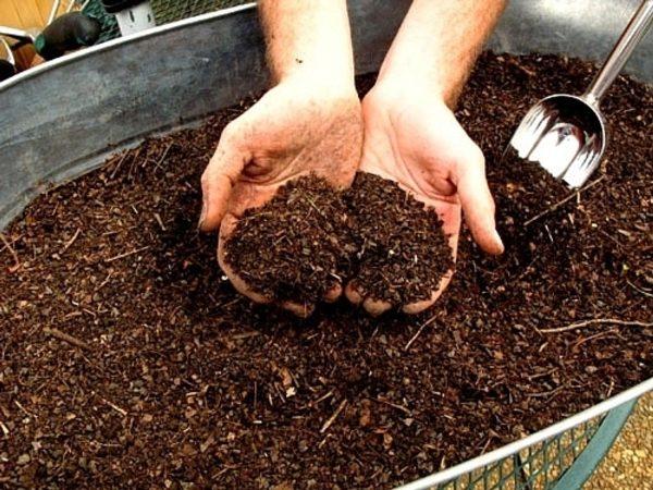 Перед посадкой огурцов грядку следует удобрить компостом