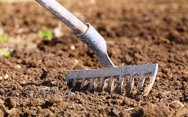 После сбора урожая почву нужно перекопать и выровнять граблями
