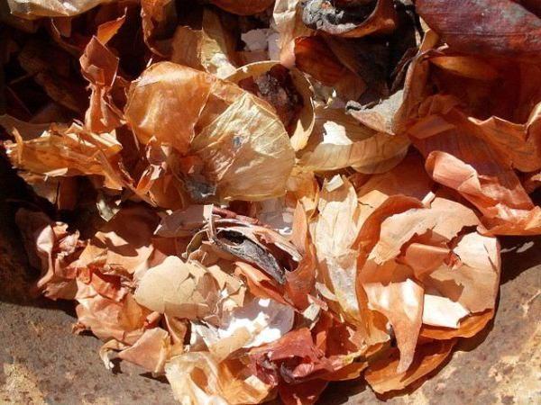 Польза луковой кожуры заключается в том, что в ней содержится большое количество минеральных веществ