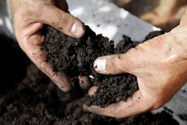 Грунт нужно обязательно перекопать с удобрением и хорошенько разрыхлить поверхность, чтобы предотвратить образование комков