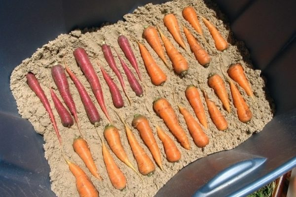 Где и как правильно хранить морковь в домашних условиях