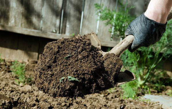 Перед высадкой рассады необходимо перекопать почву и удалить все сорняки