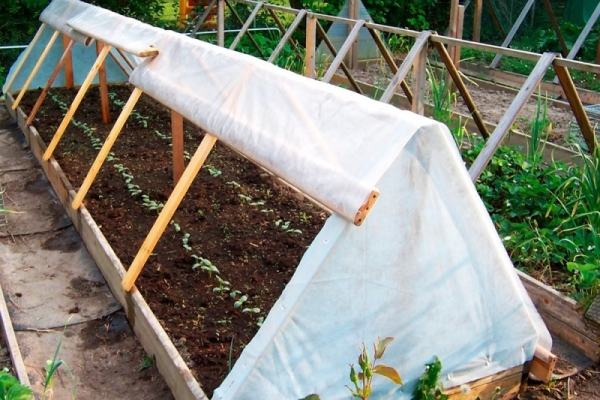 После посадки семян в открытый грунт и увлажнения, нужно накрыть почву плёнкой, зафиксированной на каркасе
