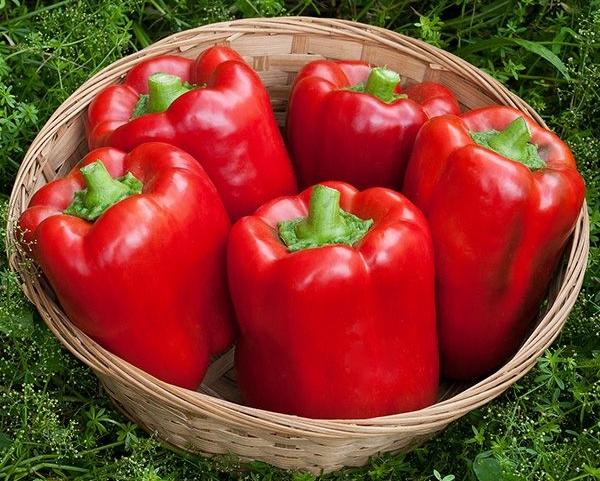 Сорт теплолюбивый, неприхотливый в выращивании, по достижении спелости становится красным