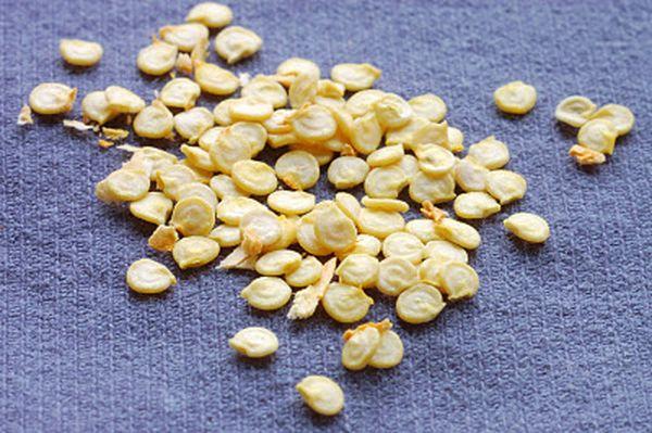 Семена перца для рассады должны быть качественными