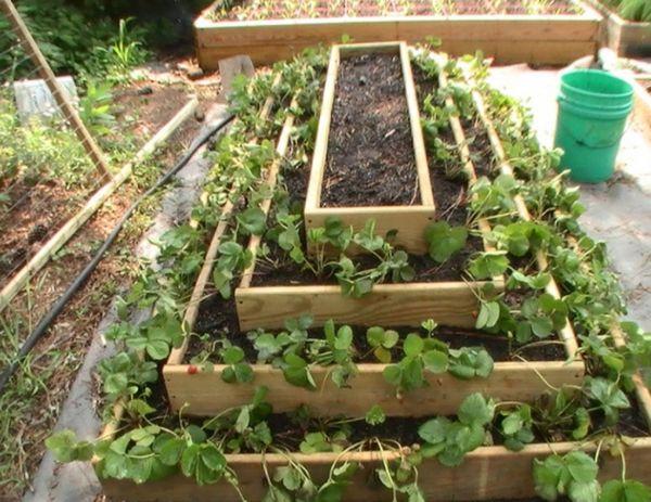 Форма клумбы в виде пирамиды позволяет уменьшить время созревания клубники и увеличить урожайность