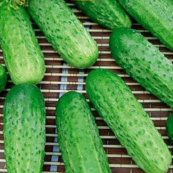 Вес плодов не превышает 110 грамм