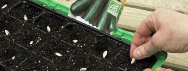 высеваем семена