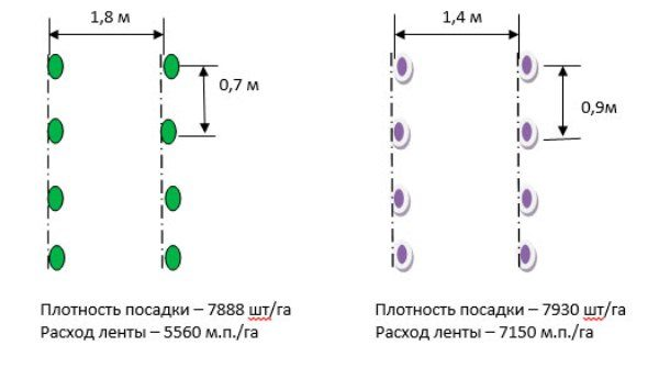 Схема посадки арбуза