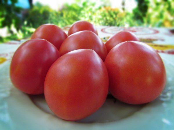 Сорт Буденовка устойчив к фитофторозу, мучнистой росе и другим распространенным заболеваниям