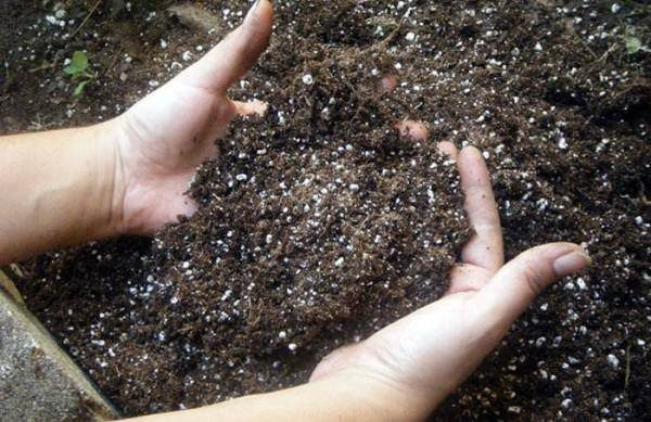 Чтобы огурец рос быстро и хорошо, почву необходимо удобрить