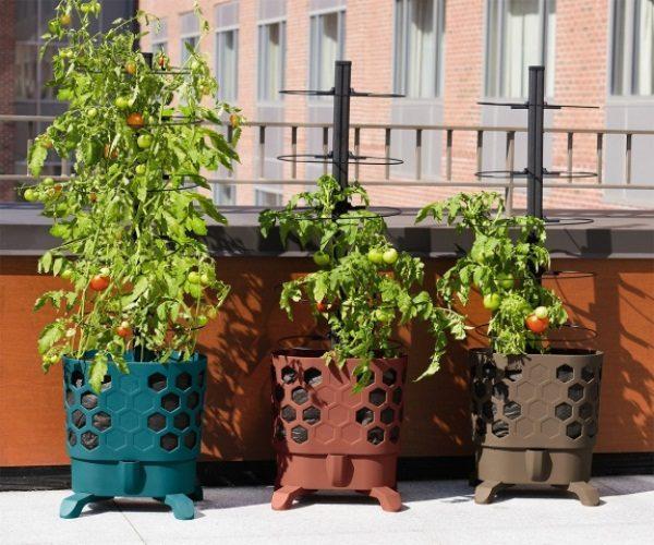 Для выращивания зимой комнатных томатов выбирают емкости объемом 2 л (для карликовых сортов), 4 л (для среднерослых разновидностей) или 5 л (для ампельных растений)