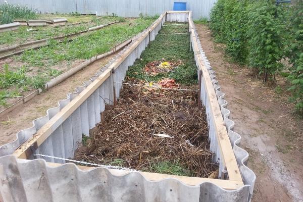 Желательно выращивать кабачки на теплых грядках или компостных кучах