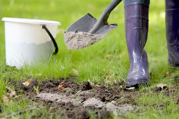 За несколько недель до посадки почву оснастить золой и перегноем, перекопать