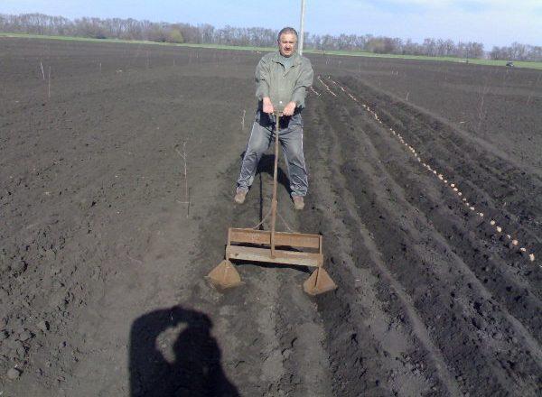 Посадка картофеля с помощью ручных приспособлений