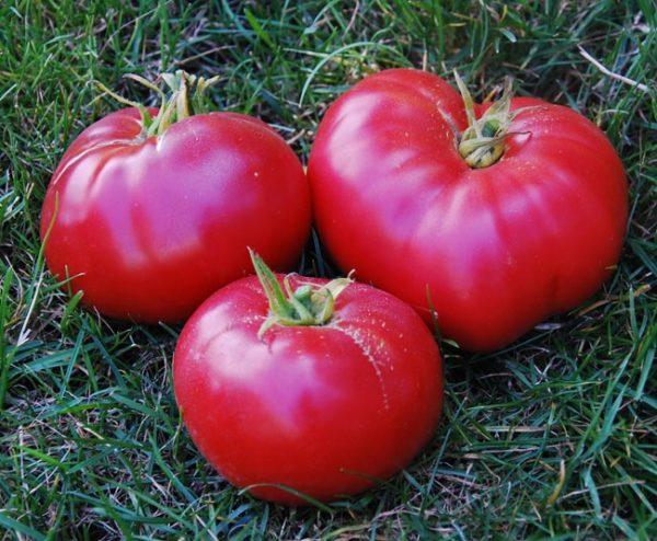 Спелые и сочные помидоры мехико
