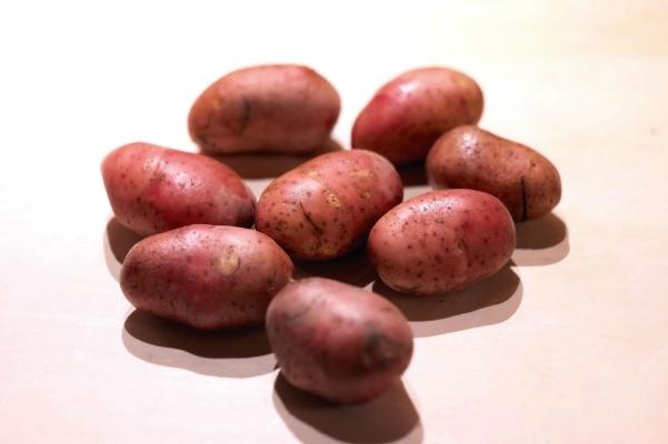 Картофель среднеспелый, подходит для выращивания в Центральном и Волго-Вятском регионах