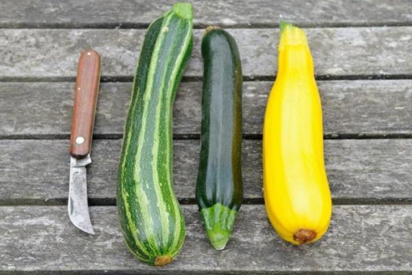 Овощ скороспелый, тепло- и влаголюбивый, низкокалорийный, быстр в приготовлении