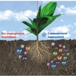 Схема почвы до и после добавления удобрений