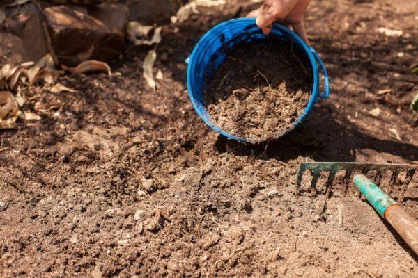Подготовку почвы к посадке томатов следует начинать осенью