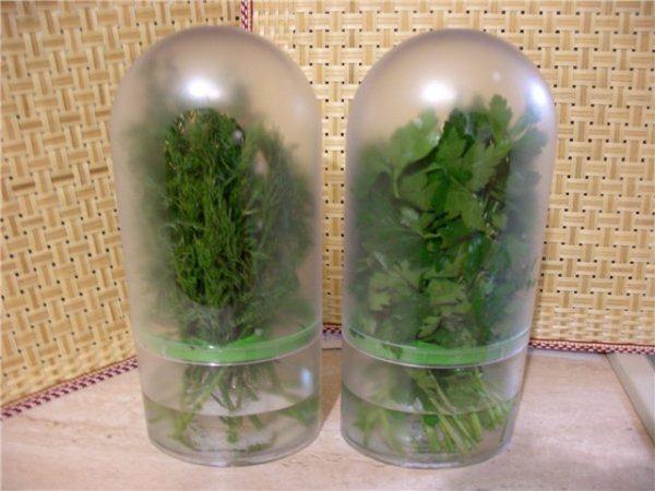 Хранение зелени в пластиковых контейнерах