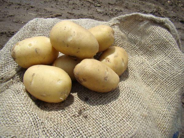 Картофель Наяда